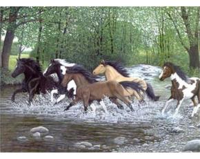 Malování podle čísel- Běžící koně vodou