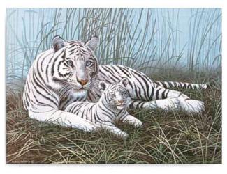 Malování podle čísel- Bílý tygr s mládětem