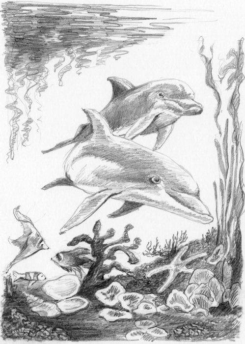Malování SKICOVACÍMI TUŽKAMI-Delfíni