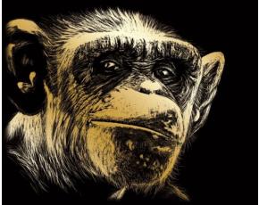 Vyškrabovací obrázek - Opice