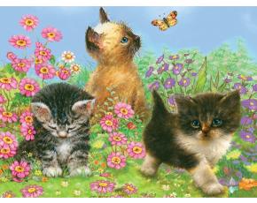 Malování podle čísel PASTELKAMI - Koťata