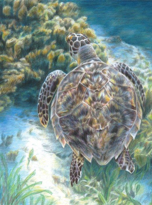 Malování podle čísel PASTELKAMI - Mořská želva