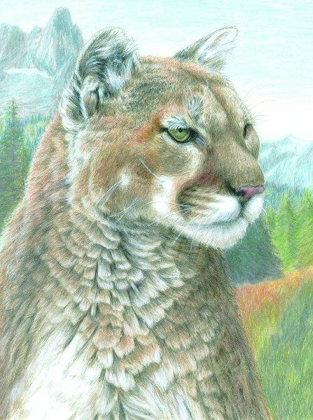 Malování podle čísel PASTELKAMI - Puma