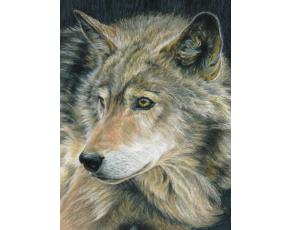Malování podle čísel PASTELKAMI - Vlk