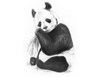 Malování SKICOVACÍMI TUŽKAMI-Panda