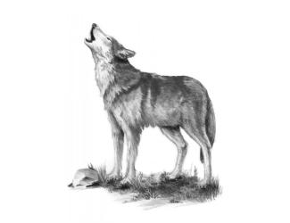 Malování SKICOVACÍMI TUŽKAMI-Vlk