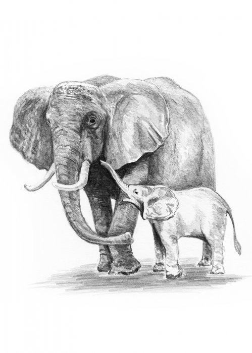 Malování SKICOVACÍMI TUŽKAMI-Sloní rodinka