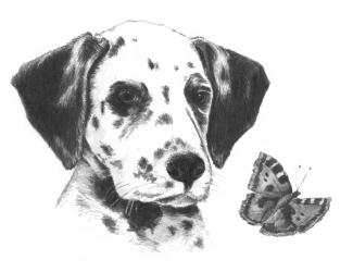 Malování SKICOVACÍMI TUŽKAMI-Hlava dalmatýnka s motýlem