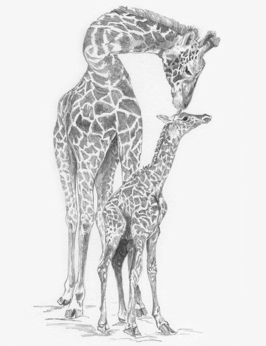 Malování SKICOVACÍMI TUŽKAMI- Žirafa s mládětem