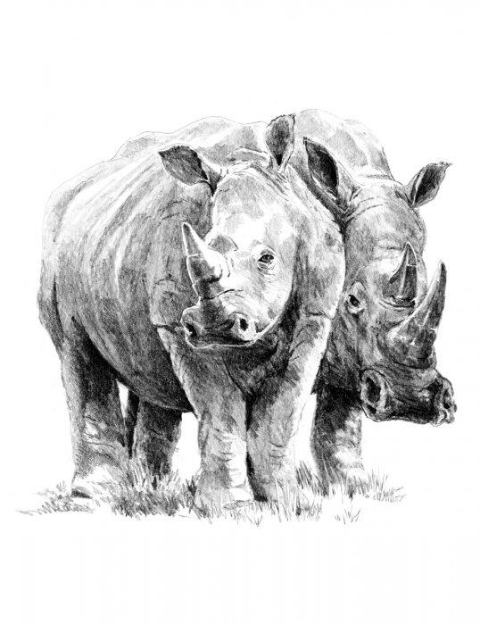 Malování SKICOVACÍMI TUŽKAMI-nosorožci