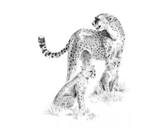 Malování SKICOVACÍMI TUŽKAMI- Gepardí rodinka