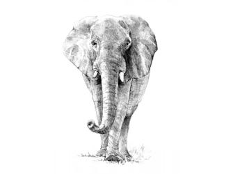 Malování SKICOVACÍMI TUŽKAMI- Slon