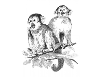 Malování SKICOVACÍMI TUŽKAMI- Opičky