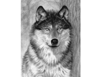 Malování SKICOVACÍMI TUŽKAMI-Hlava vlka