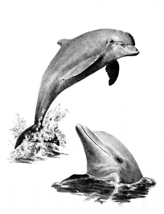 Malování SKICOVACÍMI TUŽKAMI-Delfíni - SKBN*19