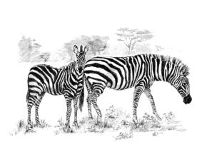 Malování SKICOVACÍMI TUŽKAMI - Zebry