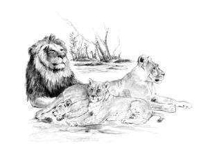 Malování SKICOVACÍMI TUŽKAMI - Lví smečka