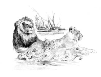 Malování SKICOVACÍMI TUŽKAMI - Odpočívající smečka lvů