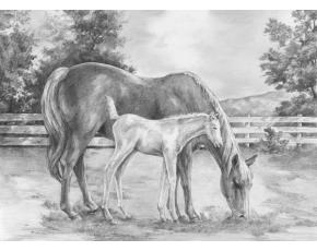 Malování SKICOVACÍMI TUŽKAMI - Kůň a hříbě
