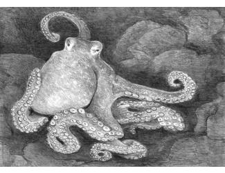 Malování SKICOVACÍMI TUŽKAMI-Chobotnice