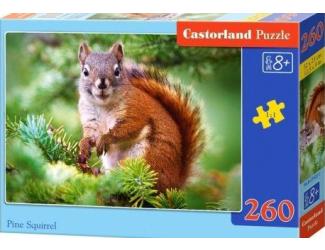 Puzzle Castorland 260 dílků - Veverka