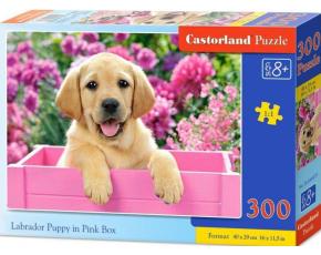 Puzzle 300 dílků- Labrador v růžovém boxu
