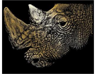 Vyškrabovací obrázek - Nosorožec